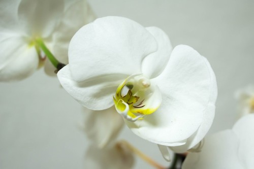 orchid-978610_640