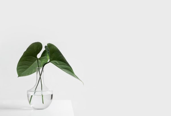 green plant minimal space